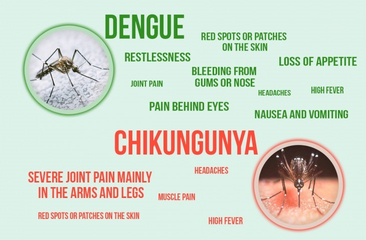 Dangerous Diseases Caused By Mosquito Bite